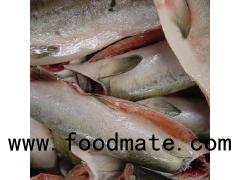 Frozen Rainbow Trout Fish/  Frozen Pink Salmon / Frozen Salmon Fish
