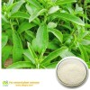 SHANGHAI CBAGRO CO.,LTD|Professional nature plant extracts manufacturer|Stevia Extract sugar