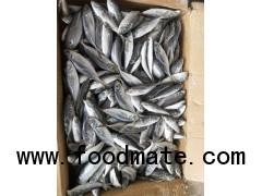 Frozen Fish Horse mackerel