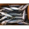 Pacific Mackerel Whole Round