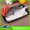 food showcase chiller Meat/Poultry/Fish absorbent fabric tray Pad
