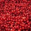IQF Frozen Lingonberry