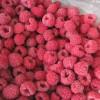 IQF Frozen Raspberry